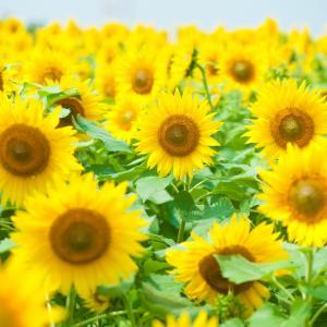 ニコニコ太陽 :周りを明るくできる人に