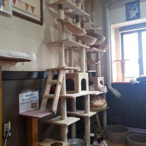 猫カフェに行ってみた…