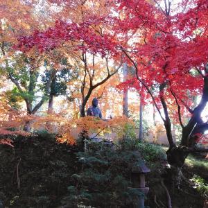 2020年 京都の紅葉