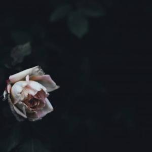 36歳 同い年の死…芦名星さんの自殺から死について考える。