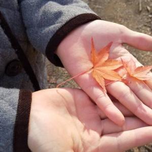 秋の嵐山渓谷 岩畳の散歩で心洗われた休日。