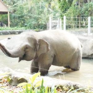 シンガポール動物園 Singapore Zooに1歳子連れで行ってきたよ
