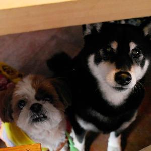 ミーテカフェ美園を貸し切りで犬13頭と猫1匹のランチ会!【2020年2月11日】