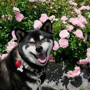 いわみざわ公園でバラとピザと展望台【2020年7月5日】