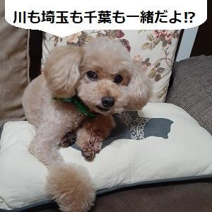 【株式投資】経済指標の雲行き怪しく、経済回復期待は後退、東京のリバーサルの動きがどこまで続くか