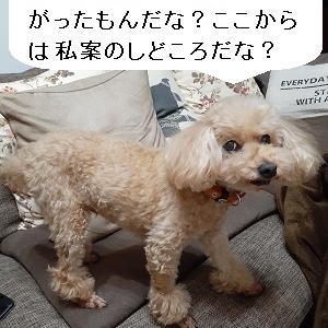 【あさイチの株の素】トランプ大統領の政権移行姿勢を好感してNYは上昇、東京は月末の動きに注意したい
