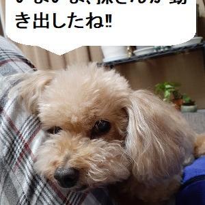 【あさイチの株の素】追加経済対策に進展見られず、利確の動きが全体に、東京は損出し売却が佳境に