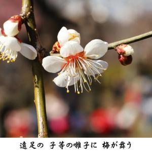2月 赤いお囃子 梅 -春日野-