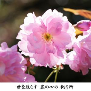 4月 花の心の拠り所