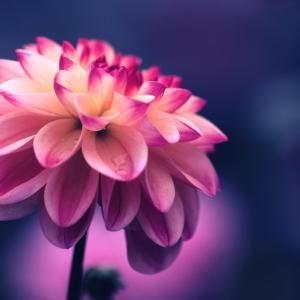 美人の定義。自分に手をかけている人は皆美しい
