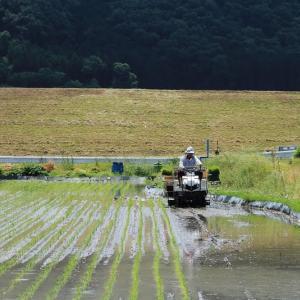 農繁期にて 田植え