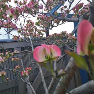 春の明日香村ツーリング