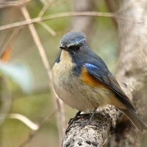 年末年始の野鳥撮影