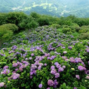 美の山公園の紫陽花と野鳥