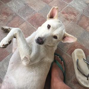 愛犬の突然の死に思うこと@フィリピン