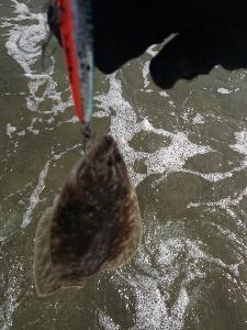 砂浜でのルアー釣り