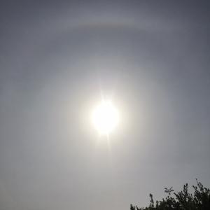 【大阪の空】いま日輪出てますよー!