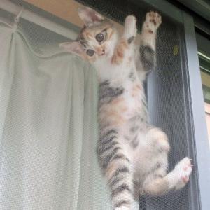 猫が網戸を破る!簡単なものから本格的なものまで5つの対策