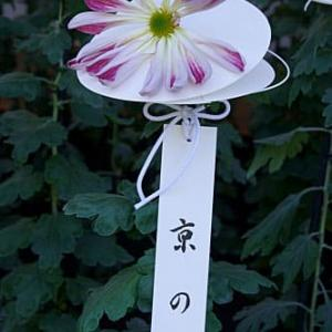 新宿御苑 菊花壇展 2020 その3