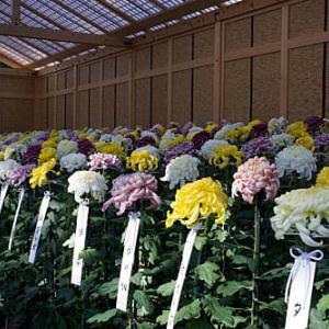新宿御苑 菊花壇展 2020 その4