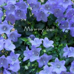 Merry bell
