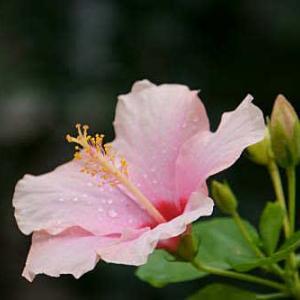 温室の花です