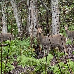 2020年度 エゾ鹿 流し猟