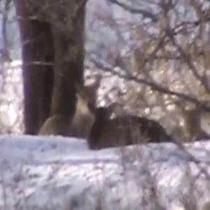 20210307 北海道忍び猟 鹿猟の動画です