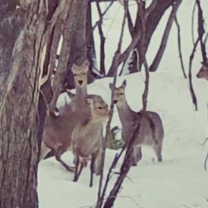 今日で鹿猟は終了です