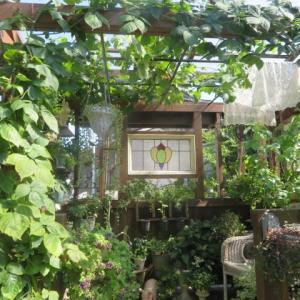 ***ピノキオになった我が家のシンボルツリーの今と自然の力強さに敬服