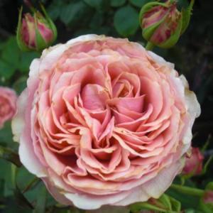 ***幻のマリアナターレと久々にお迎えしたお花たち