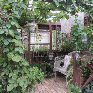 ***心痛む台風19号に被害と勇気を与えるラグビーの勝利&我が家の庭