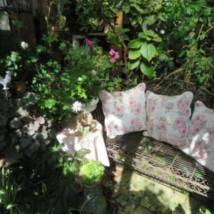 ***木漏れ日の癒しの時間と秋バラの美しさとバラの消毒とおやつ