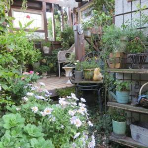 ***壊れた棚を再生し隠して雰囲気を変える&美しい秋バラたち