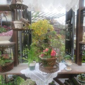 ***賑やかになってきたバラ庭とバラの消毒&エディブルフラワーでカルパッチョ