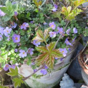 ***(´∀`*)次々と芽吹き葉を茂らせ花を咲かせるいつもと変わらぬ春の庭