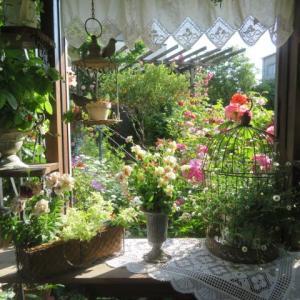 ***愛らしいミニバラの花園&さよならローブちゃんと新品種のイヴ『バルバパパ』