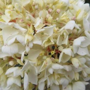 ***雨上がりの花殻摘みと寂しくなってきたバラ庭&『ギャー(´;ω;`)へび~』