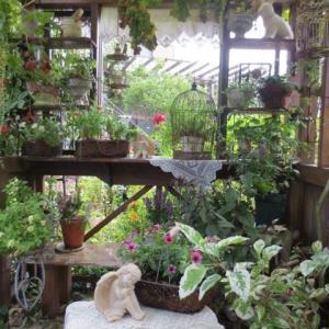 ***(* ´艸`)嬉しいけれど気がひける話とモネの花かご&頑張る庭の花達