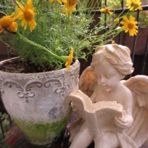 ***春より美しいバラ『フレーズバニーユ』&ブドウ棚のテラスにシュウメイギク初音を