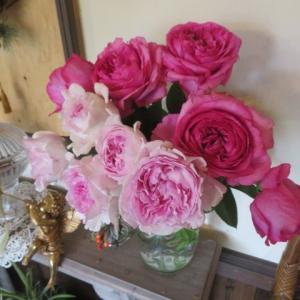 ***いよいよ挿し木を植え替えです(´∀`)&今日開花の絞りのバラたち
