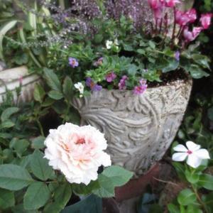 ***(;´Д`)孫が…そして友人が…&心癒してくれる私の庭と花達