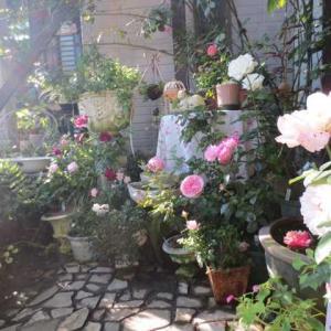 ***素敵なタイルの使い道(* ´艸`)&小鳥からバラの水場に模様替え