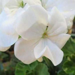 ***(*^。^*)これだ~!真似して活かす庭作り&今日も頑張るバラ剪定60鉢