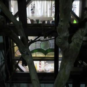 ***(*''▽'')わぁ~明かりが魅力の夜の庭&切り花品種56鉢の剪定と挿し木