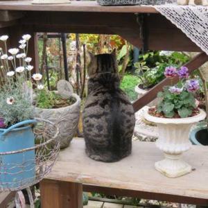 ***( *´艸`)一日中降り続く中の剪定39鉢と挿し木&いつも一緒の隣のタツ