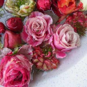 ***(´;ω;`)しばらくお別れバラのある庭&剪定完了と最後にバラ三昧