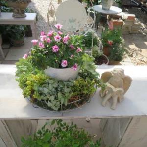 ***(^O^)/今週の裏庭作りパート2★リンゴ箱で作業台製作&薔薇の消毒