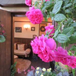 ***(*^。^*)春のバラの咲くお気に入りの場所&雨にうたれ美しく咲くバラ達のご紹介