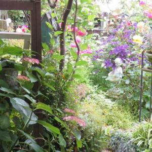 ***(*^▽^*)ガーデンルームから見る風景&剪定ばさみの使いごこち
